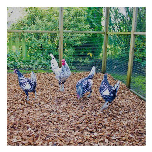 Hardwood Woodchip for chickens
