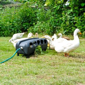 Automatic Drinker for Ducks and Poultry