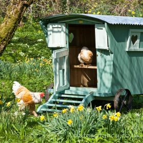 The Gypsy Willow Chicken House