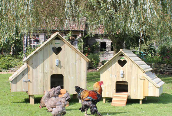 Chickens & Housing - Frequently Asked Questions