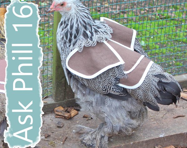 Ask Phill 16 - How to fit a Poultry Saddle