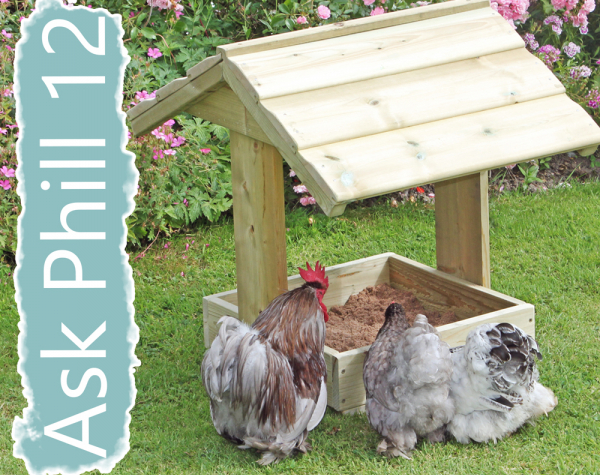 Ask Phill 12 - Dustbaths for chickens