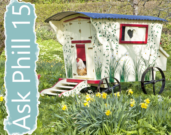 Ask Phill 15 - Wooden v Plastic Coops - Which is better?