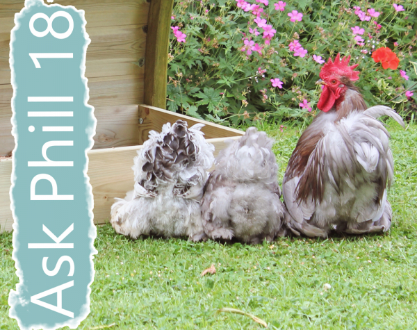 Ask Phill 18 - Chickens with a messy bottom