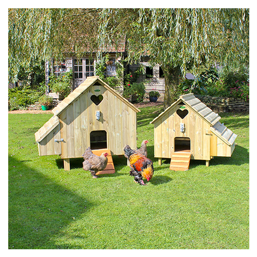 Maggie's Hen Houses with Brahmas