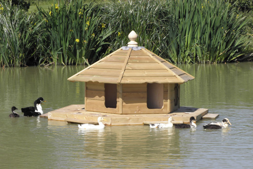 Ducks on the Floating Duck House